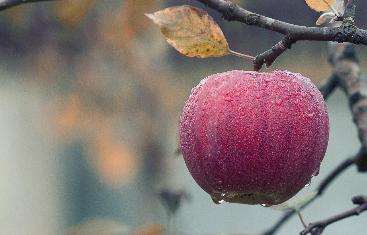 O consórcio europeu EIT Food está à procura das 60 startups